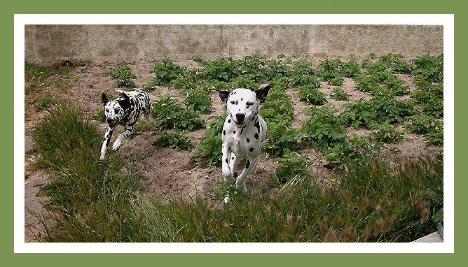 "photo ""102 dalmat"" tags: nature, pets/farm animals, wild animals"