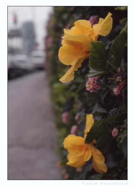 """фото """"Городские."""" метки: природа, макро и крупный план, цветы"""