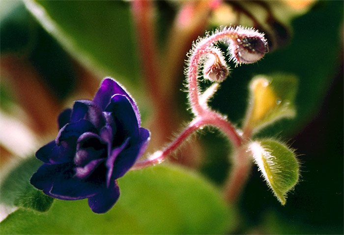 "photo ""Pirouette"" tags: macro and close-up,"