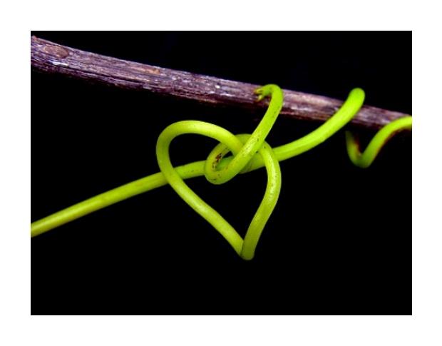 """photo """"Green heart ...**"""" tags: macro and close-up,"""