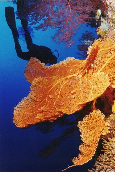 """фото """"Diving"""" метки: подводные,"""