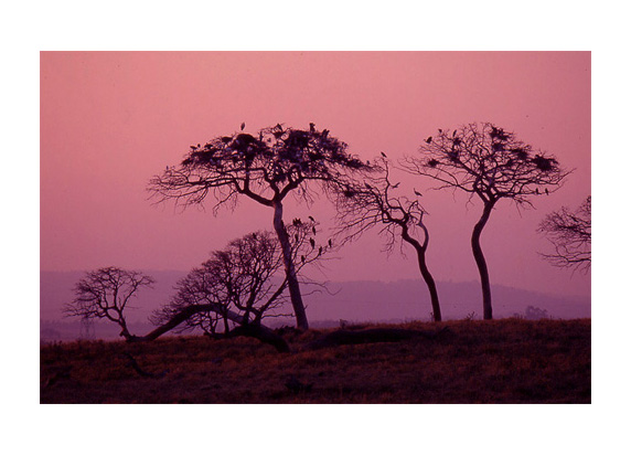 "photo ""A little Africa in Portugal"" tags: landscape, sunset"