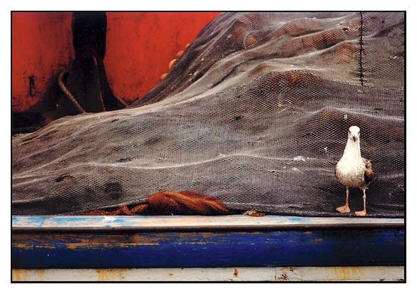 "фото ""seagul"" метки: природа, дикие животные"