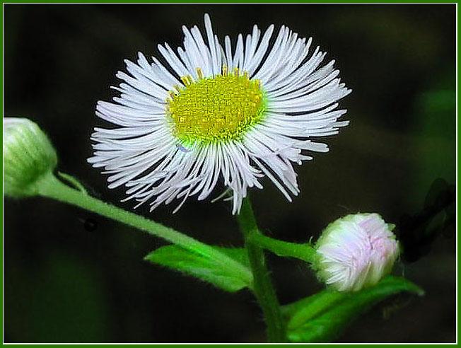 """фото """"===="""" метки: макро и крупный план, природа, цветы"""