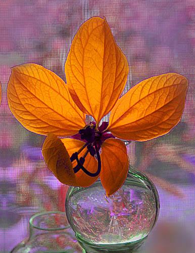 "photo ""Orange Flower in glass vase"" tags: still life,"