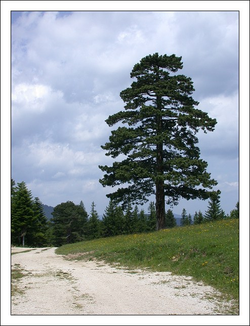 "фото ""Noname"" метки: пейзаж, лес, лето"