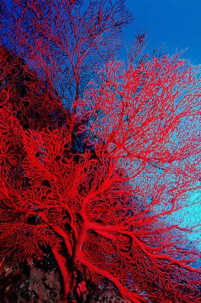 """фото """"Diving 3"""" метки: природа, подводные,"""