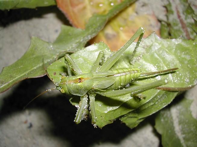 """фото """"зеленый друг"""" метки: макро и крупный план, природа, насекомое"""