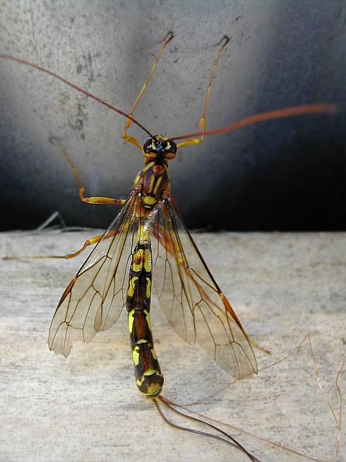 "photo ""Thin"" tags: macro and close-up, nature, insect"