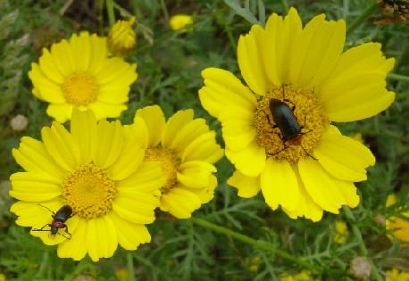 "фото ""Walk on the yellow"" метки: природа, цветы"