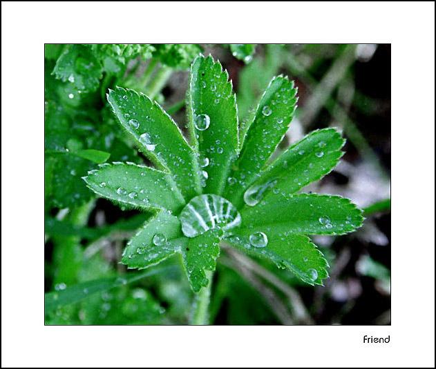 """фото """"После дождя"""" метки: природа, разное, цветы"""