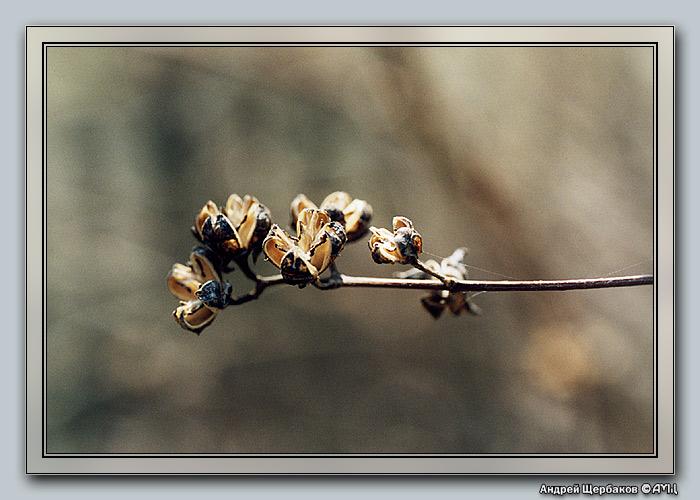"""фото """"Весенний жасмин"""" метки: макро и крупный план, природа, цветы"""