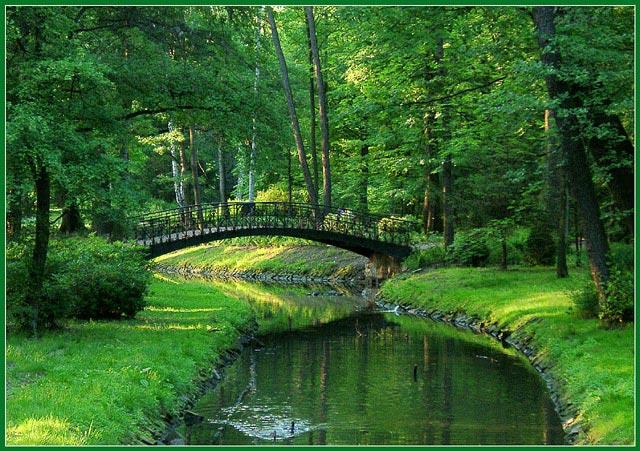 """photo """"Bridge"""" tags: landscape, nature, flowers, forest"""