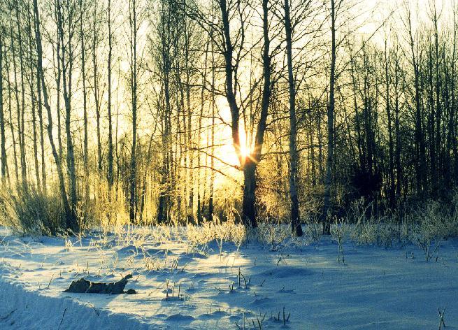 """фото """"Морозным утром. Восход"""" метки: пейзаж, закат, зима"""