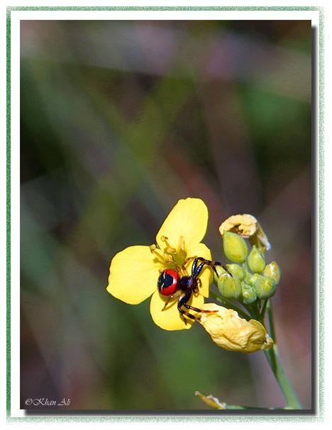 """фото """"Colors of a nature"""" метки: макро и крупный план, природа, насекомое"""