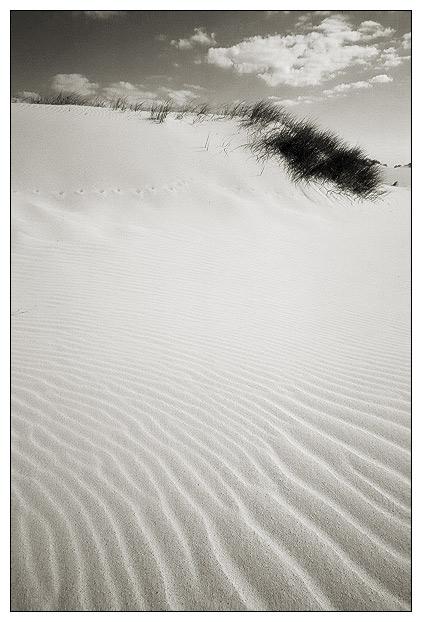 """фото """"Life - sand ?"""" метки: пейзаж,"""