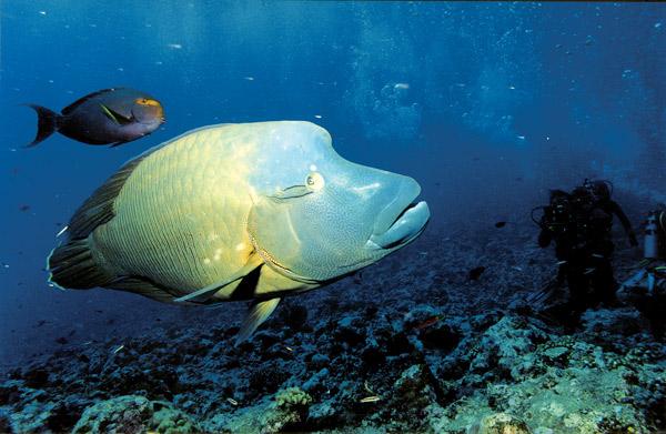 """фото """"Diving 4"""" метки: природа, подводные,"""