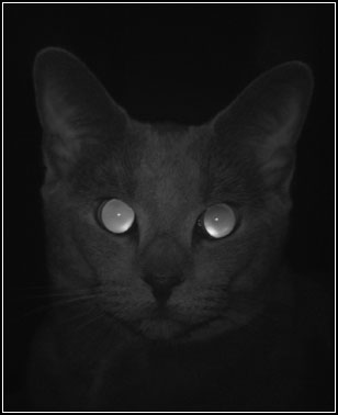 "photo ""A gray cat in a dark room"" tags: nature, portrait, pets/farm animals"