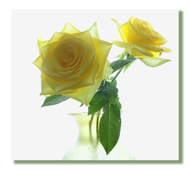 "photo ""Yellow Roses"" tags: misc.,"