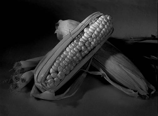 "photo ""Corn"" tags: still life,"