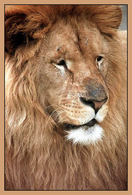 "фото ""King"" метки: природа, дикие животные"