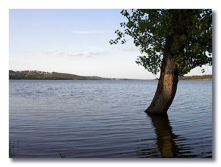 "фото ""Water for all"" метки: пейзаж, природа, вода, цветы"