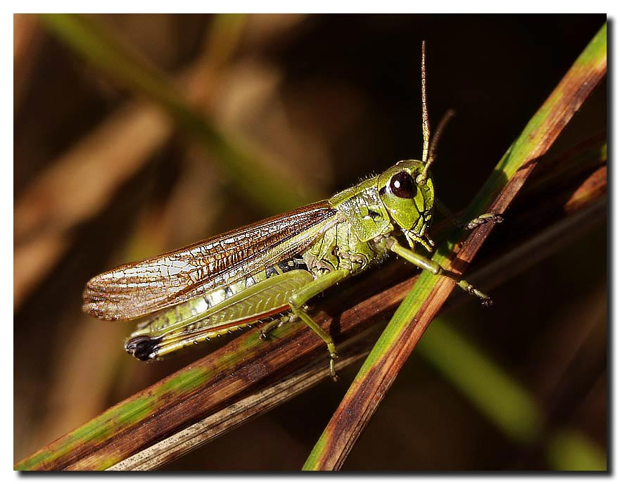 """фото """"Последнее тепло. Прощание"""" метки: природа, макро и крупный план, насекомое"""