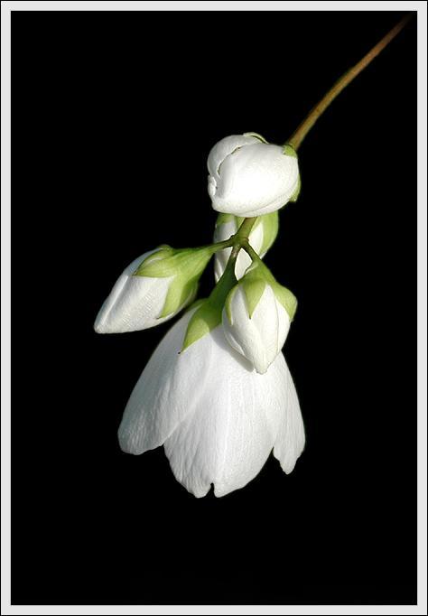 "фото ""Cherchez la femme"" метки: природа, цветы"
