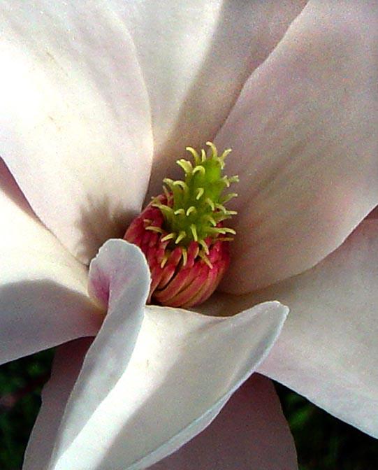 "photo ""Invitation"" tags: nature, flowers"
