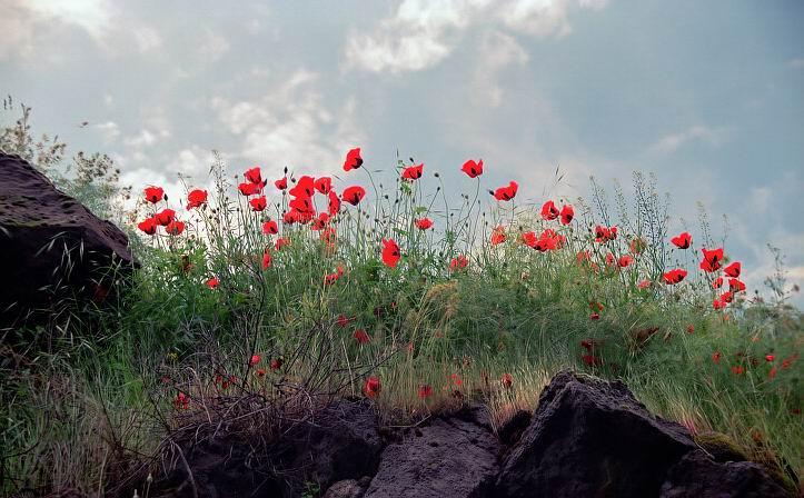 """фото """"Ало-крапчатый небосвод ..."""" метки: пейзаж, природа, цветы"""