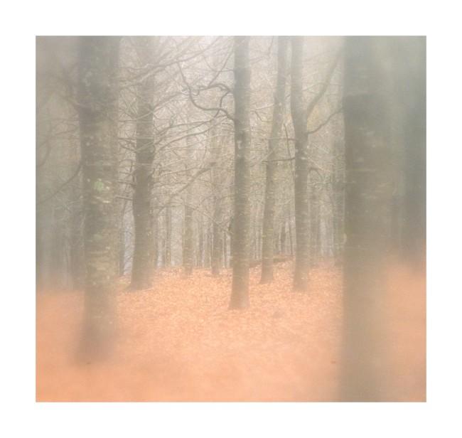 """фото """"Avalon"""" метки: пейзаж, зима, лес"""
