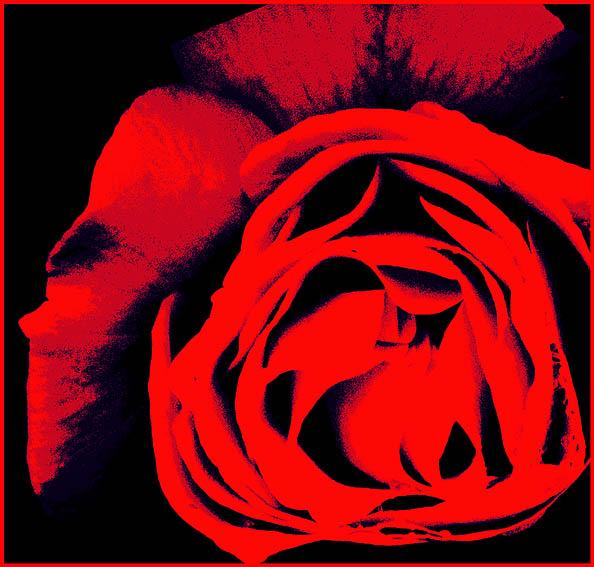 """фото """"Красная роза для Сторожук Ирины."""" метки: абстракция, фотомонтаж,"""