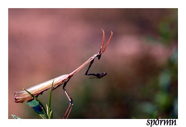 """фото """"Top predator"""" метки: природа, насекомое"""
