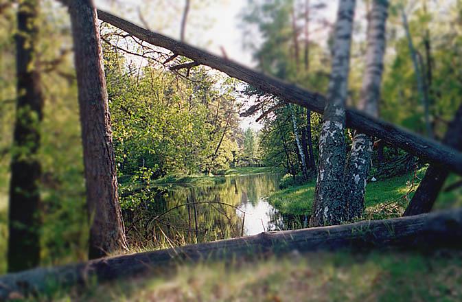 """фото """"Натуральный багет"""" метки: пейзаж, весна"""