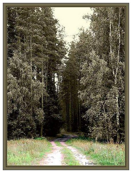 """фото """"Там,на неведомых дорожках..."""" метки: пейзаж, лес"""
