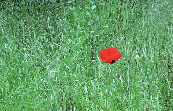 """фото """"Цветовые Контрасты Весны"""" метки: жанр, пейзаж, весна"""