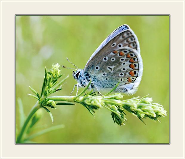 """фото """"В профиль на метле"""" метки: природа, насекомое"""