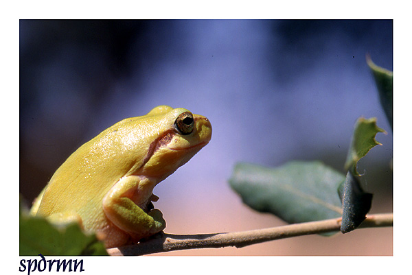 """фото """"At rest"""" метки: природа, дикие животные"""