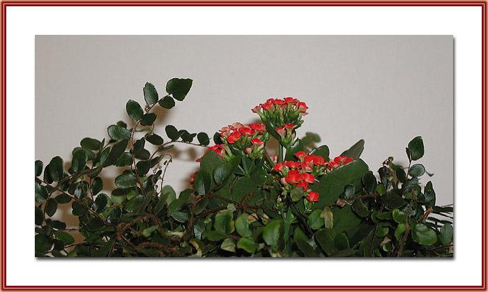 """фото """"Garden"""" метки: разное,"""