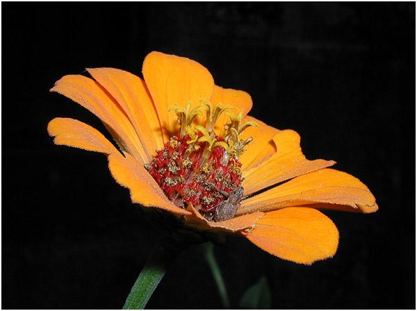 "фото ""A yellow flower"" метки: разное,"