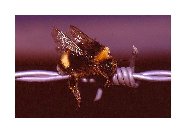 "фото ""Bzzzzz II"" метки: макро и крупный план, природа, насекомое"