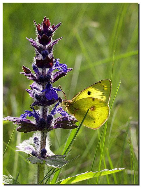 """фото """"Конец мая"""" метки: природа, пейзаж, цветы"""