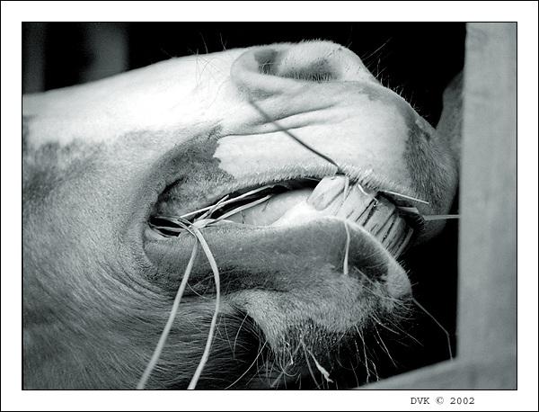 """фото """"Трудно"""" метки: природа, разное, домашние животные"""