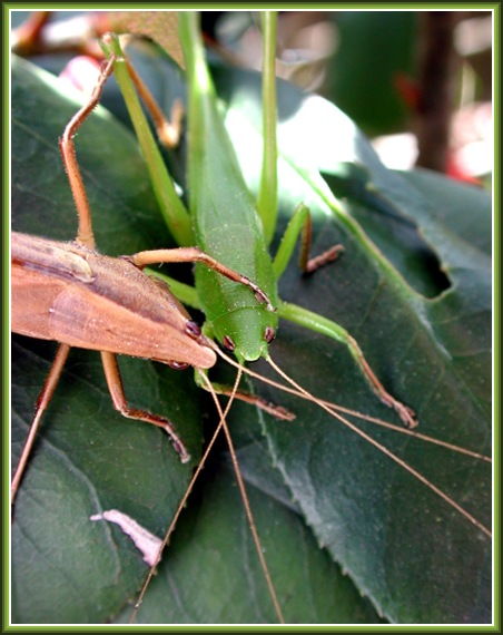"""photo """"My friend, you are so young and green..."""" tags: misc.,"""