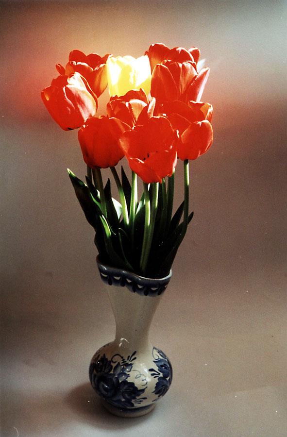 """фото """"Весенние цветы"""" метки: природа, цветы"""