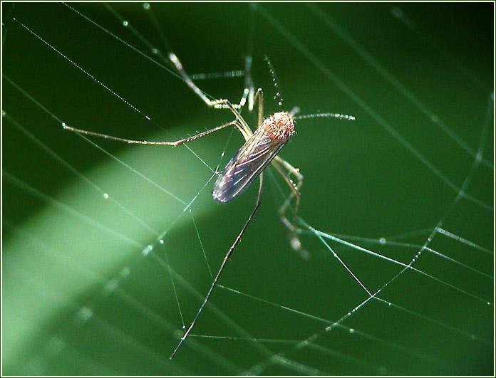 """фото """"Его последняя оплошность"""" метки: природа, макро и крупный план, насекомое"""