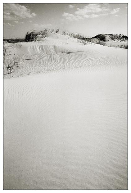 """photo """"Dune`s velvet"""" tags: landscape, summer"""