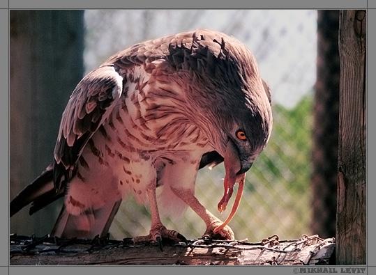 """фото """"ЗАВТРАК..."""" метки: природа, дикие животные"""