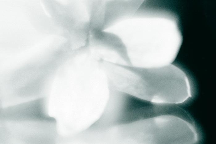 """фото """"нежность..."""" метки: природа, макро и крупный план, цветы"""