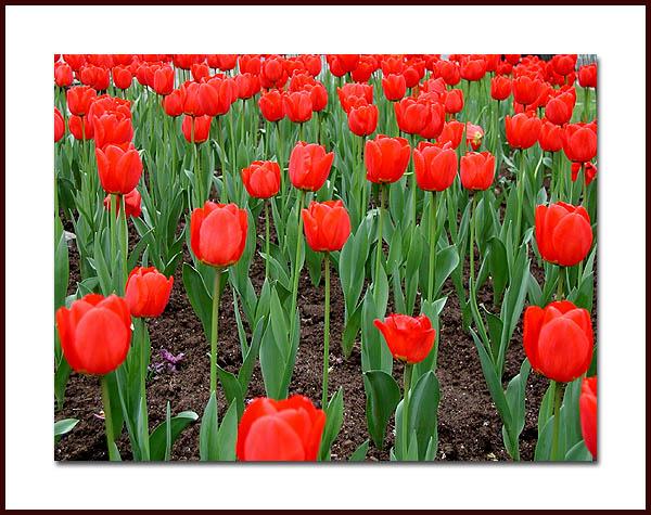 "фото ""Some red flowers"" метки: природа, цветы"